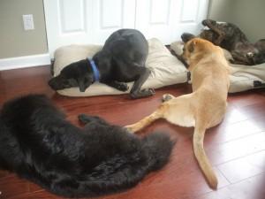 Bella, Harper, Lucas, Emmett