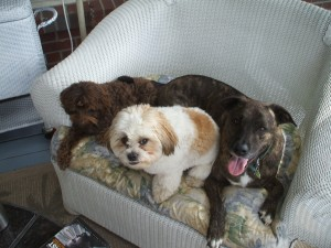 Bubba, Otto and Emmett take a break