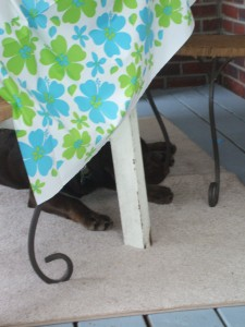 Turk hides from the little ones!