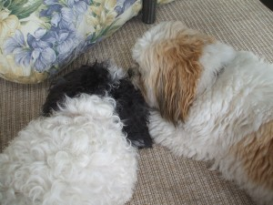 Louis and Otto put their heads together... this can't lead to anything good!