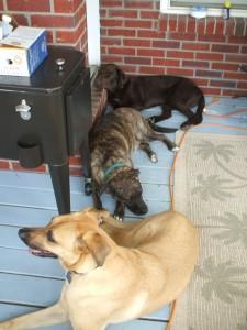Turk, Emmett and Lucas take a break