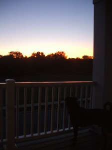 Emmett watches the sun go down at 9:45 pm!