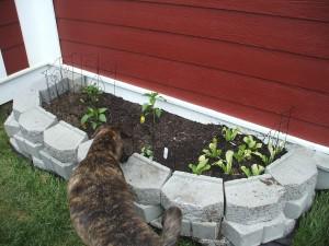 Emmett inspects our garden