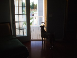 Emmett waits for John to get home