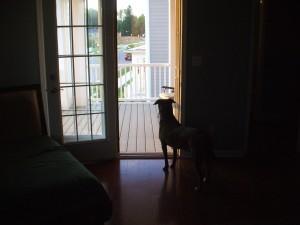 Emmett waits for John to get home