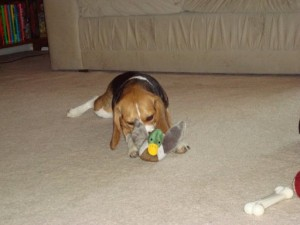 Lucy goes duck hunting! Looks like she caught one!