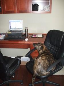 Emmett loves blogging!