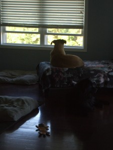 Watchful Lucas