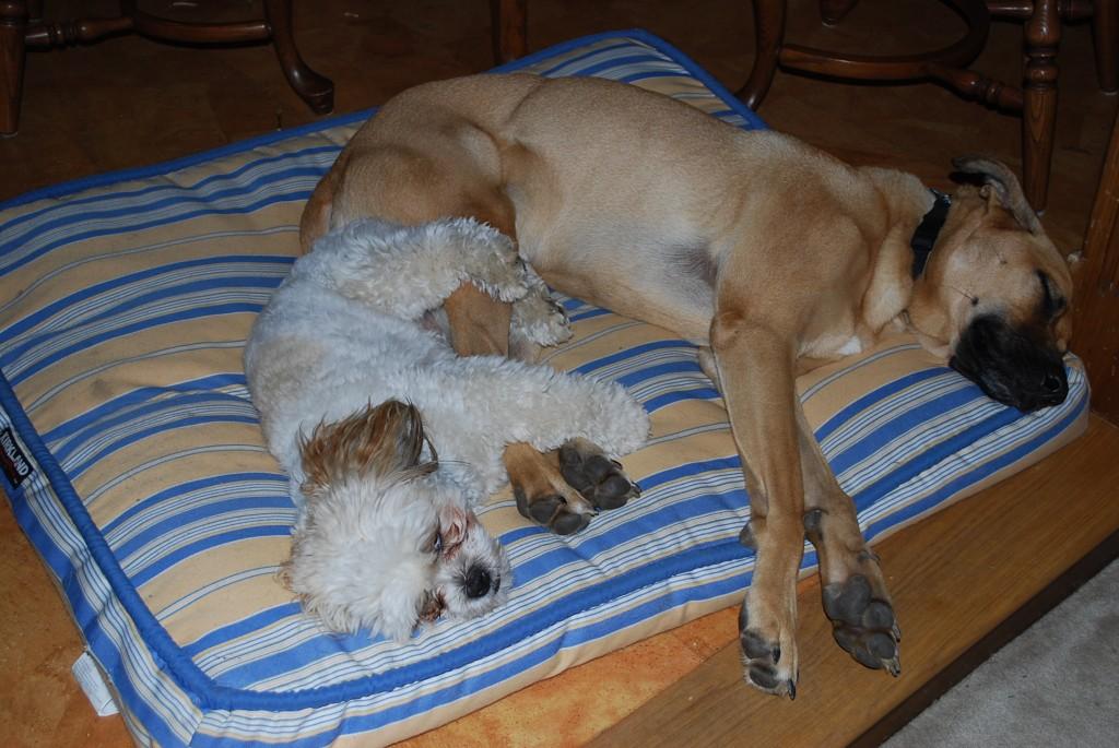 Otto and Lucas nap