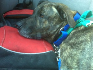 After Head Start, Emmett uses John's backpack as a pillow for the carride home.