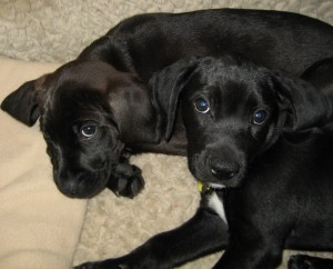 Baby Tank and Buster
