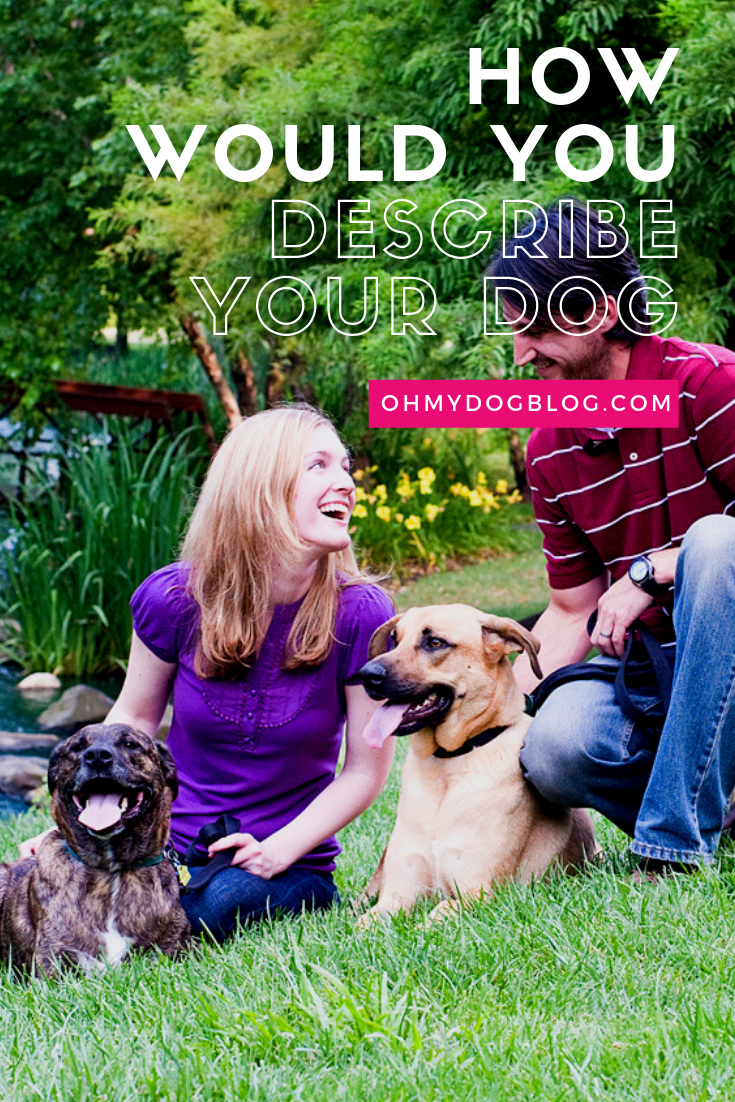 How would you describe your dog_