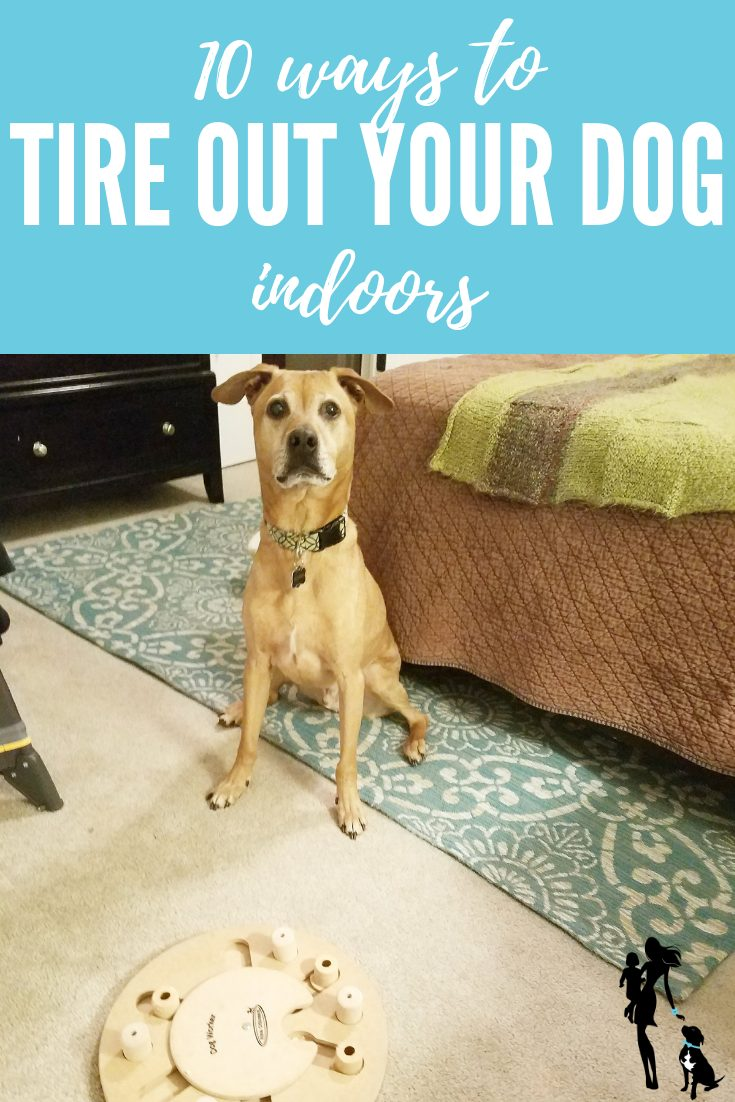 10 ways to tire out your dog... indoors!