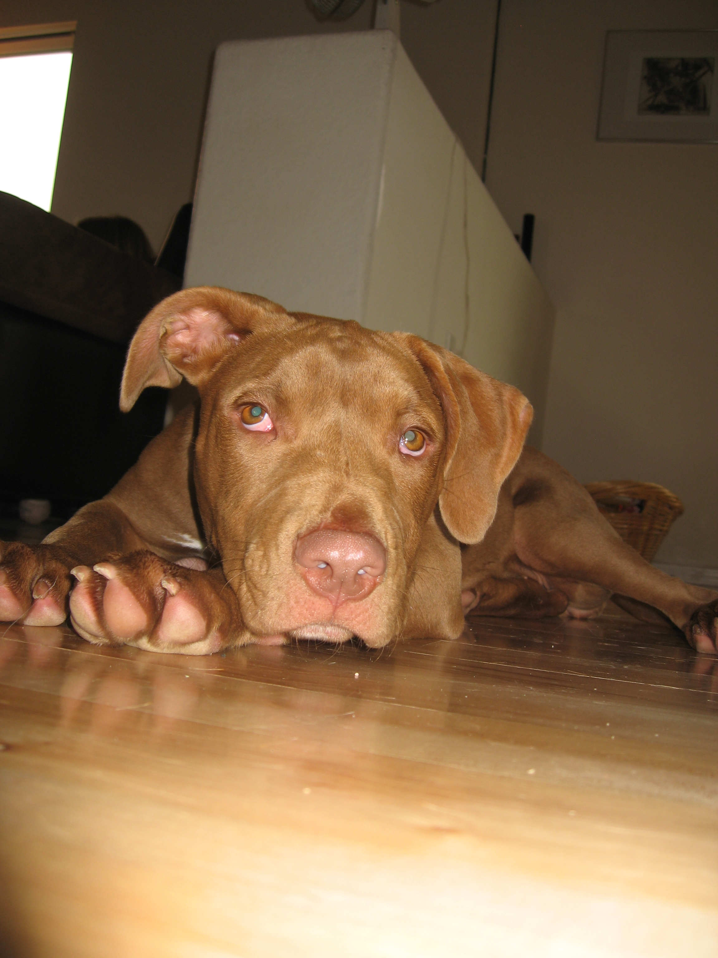 positively pit bull Archives - Page 4 of 4 - Oh My Dog!