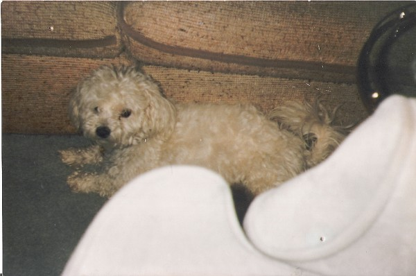 Sparky, the first dog I ever loved! (Check out that blue velvet armchair and tweed couch...)