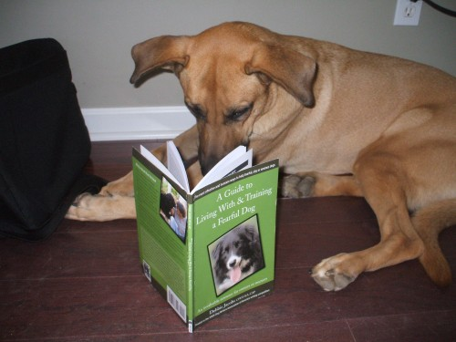Lucas reads about fearful dogs