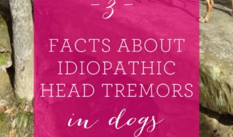 3 facts about idiopathic head tremors in dogs (1)