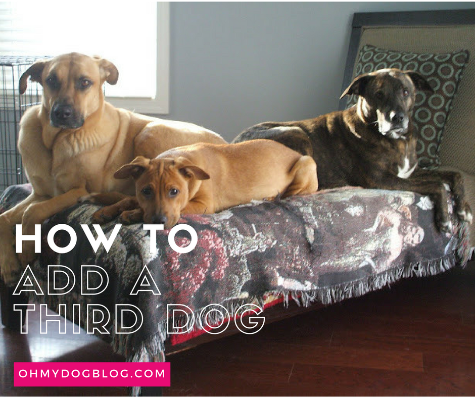 How to Add a Third Dog