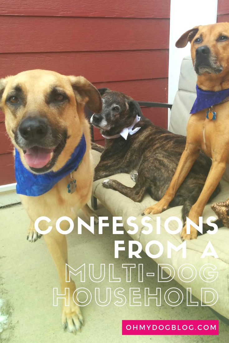 Confessions of a multi-dog household