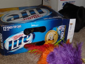 She loves playing inside this beer box.