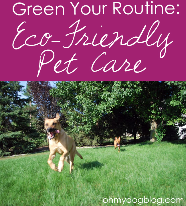Green Your Routine: Eco-Friendly Pet Care