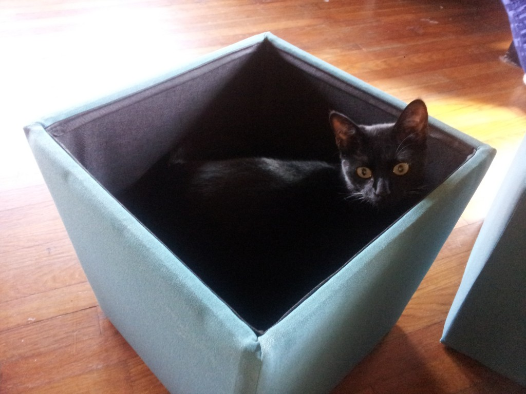 You bought this box for me, yes?