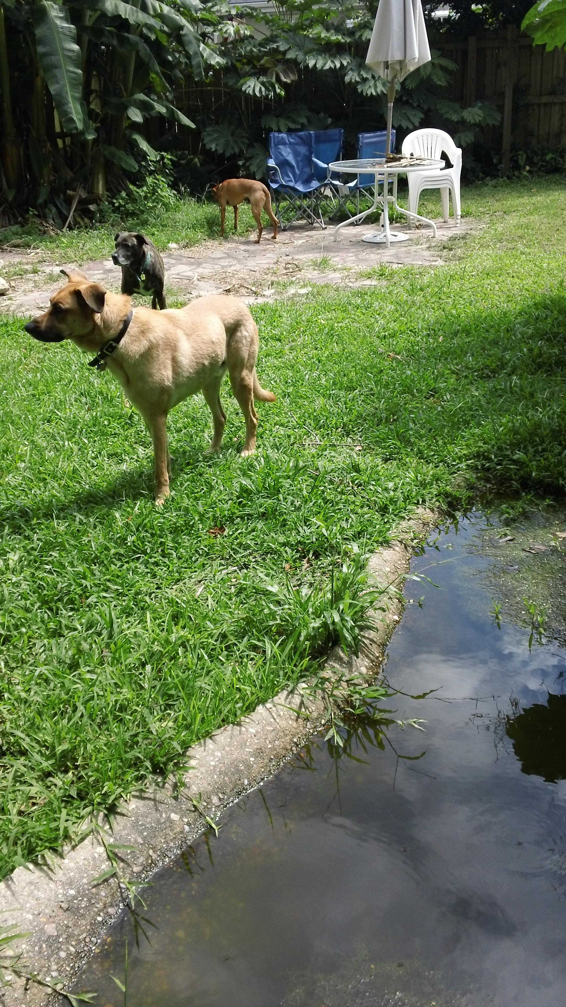 the backyard oh my dog