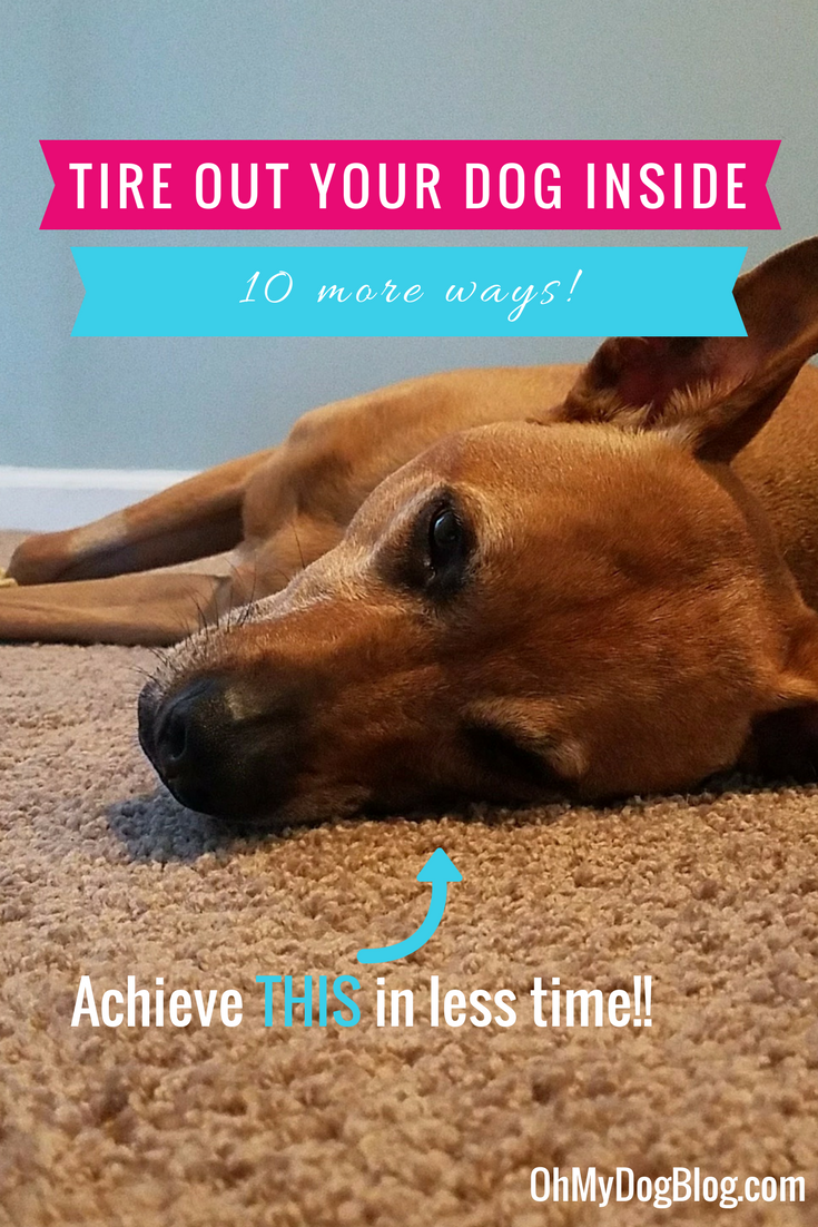 10 (more) ways to tire out your dog indoors