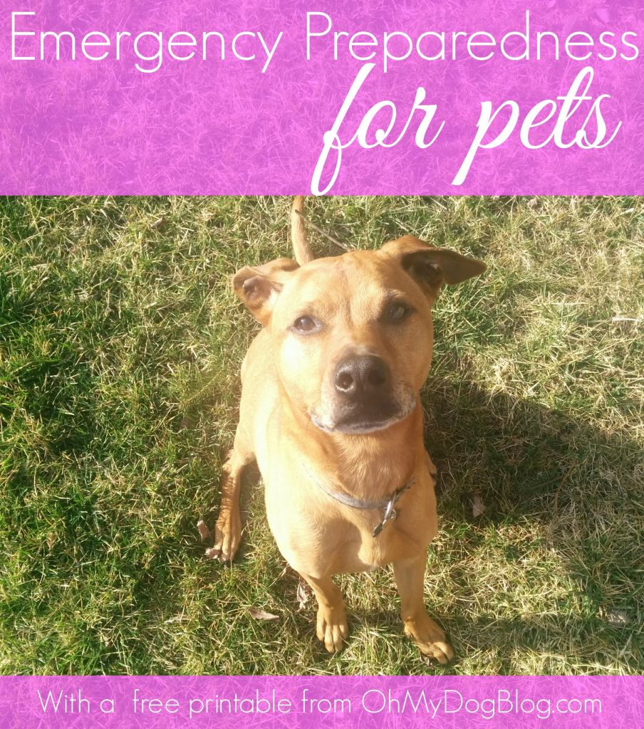 Emergency Preparedness for Pets Hurricane Kit
