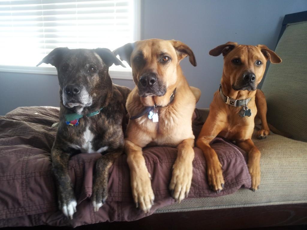 Emmett, Lucas, and Cooper