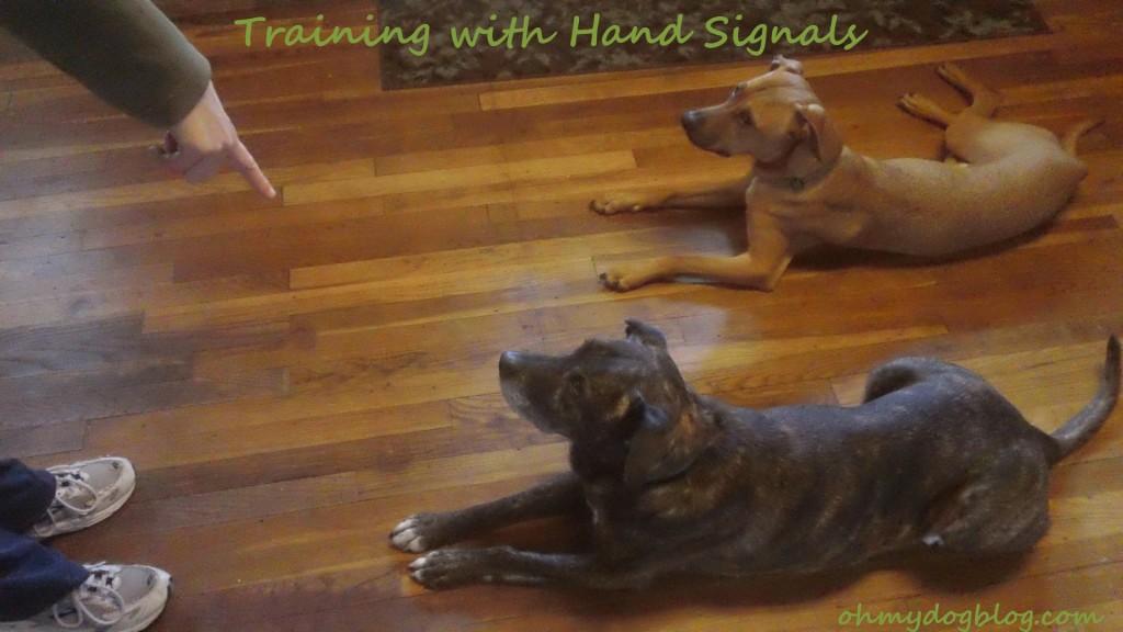 dog training with hand signals