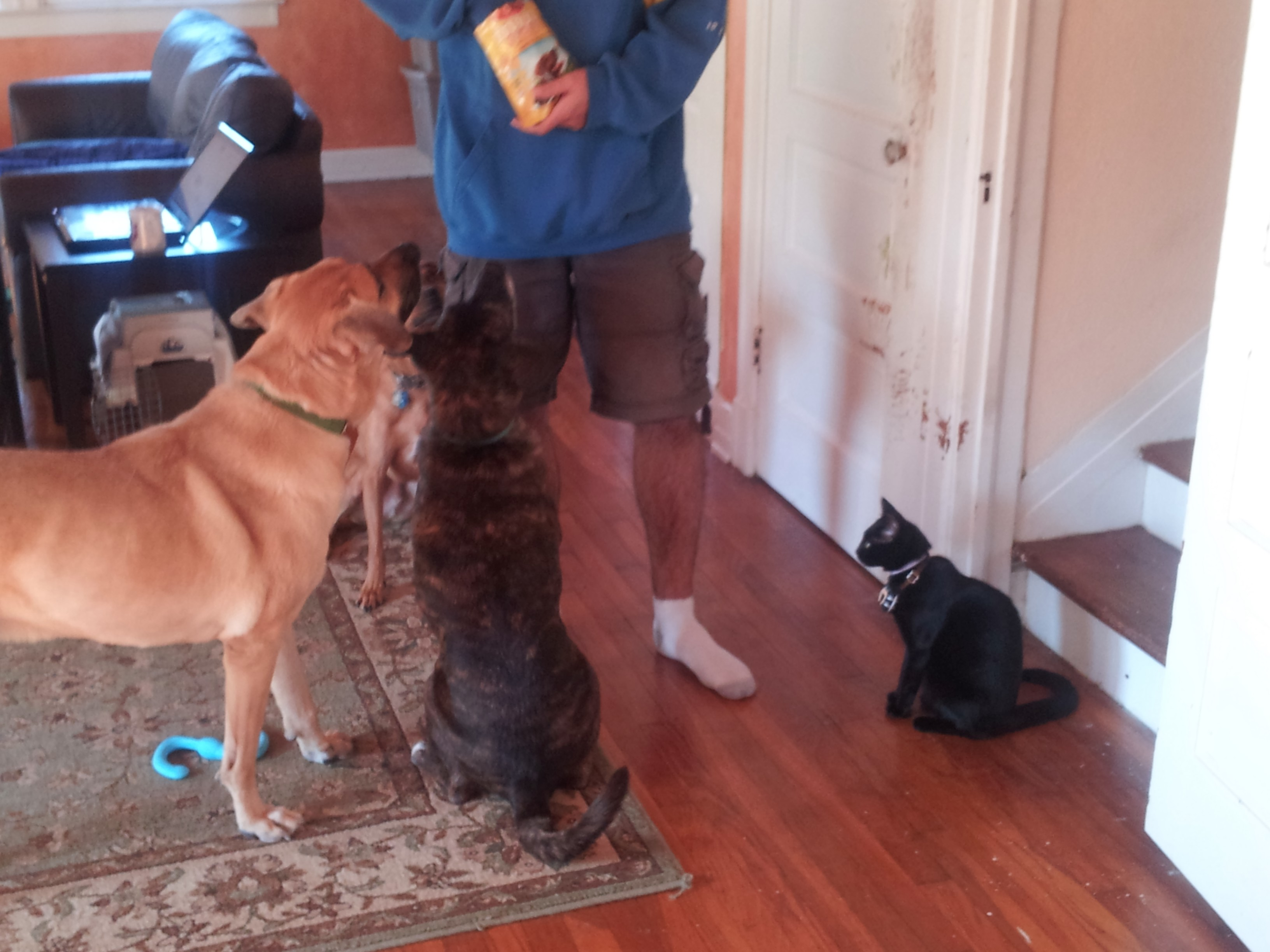 handing out treats
