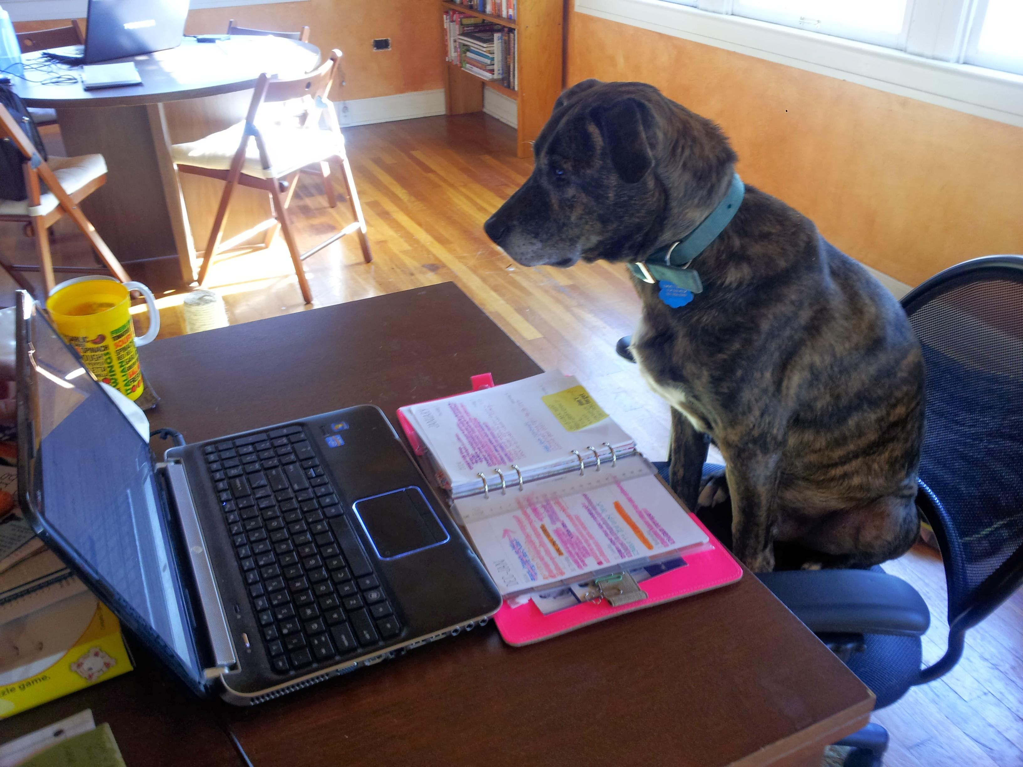 Emmett working