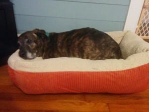 Petmate Self-Warming Bed