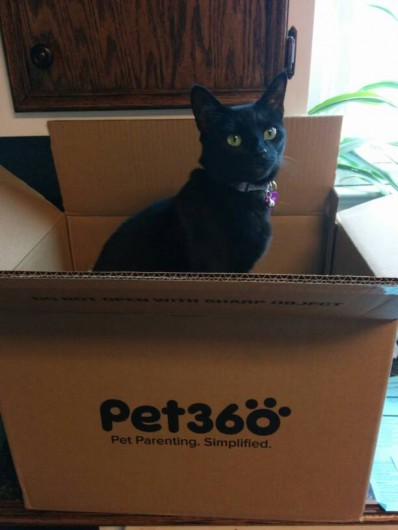 Newt in the Pet360 box