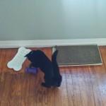 The games in Newt's cat habitat