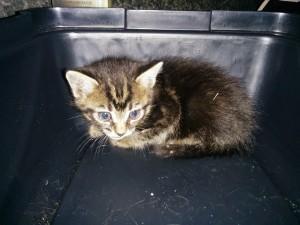 Tiny stray kitten