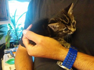 Tiny kitten fits in the palm of his hand