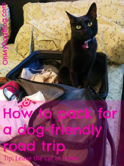 How to pack for a dog-friendly road trip