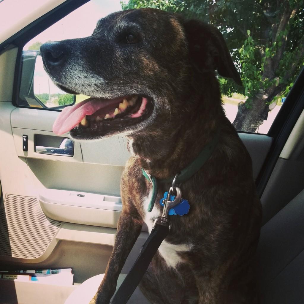 Emmett enjoyed his road trip