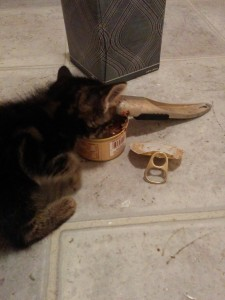 Petey gobbles up her CANIDAE food