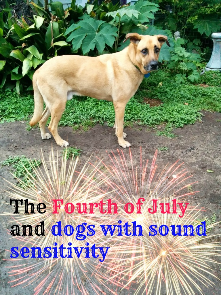 For all dogs, the Fourth can be loud and scary. For dogs with sound sensitivity, it can be terrifying.