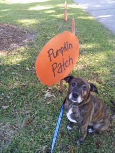 Emmett at the pumpkin patch