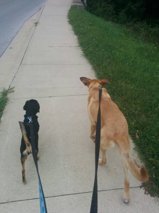 Molly and Lucas out for a walk