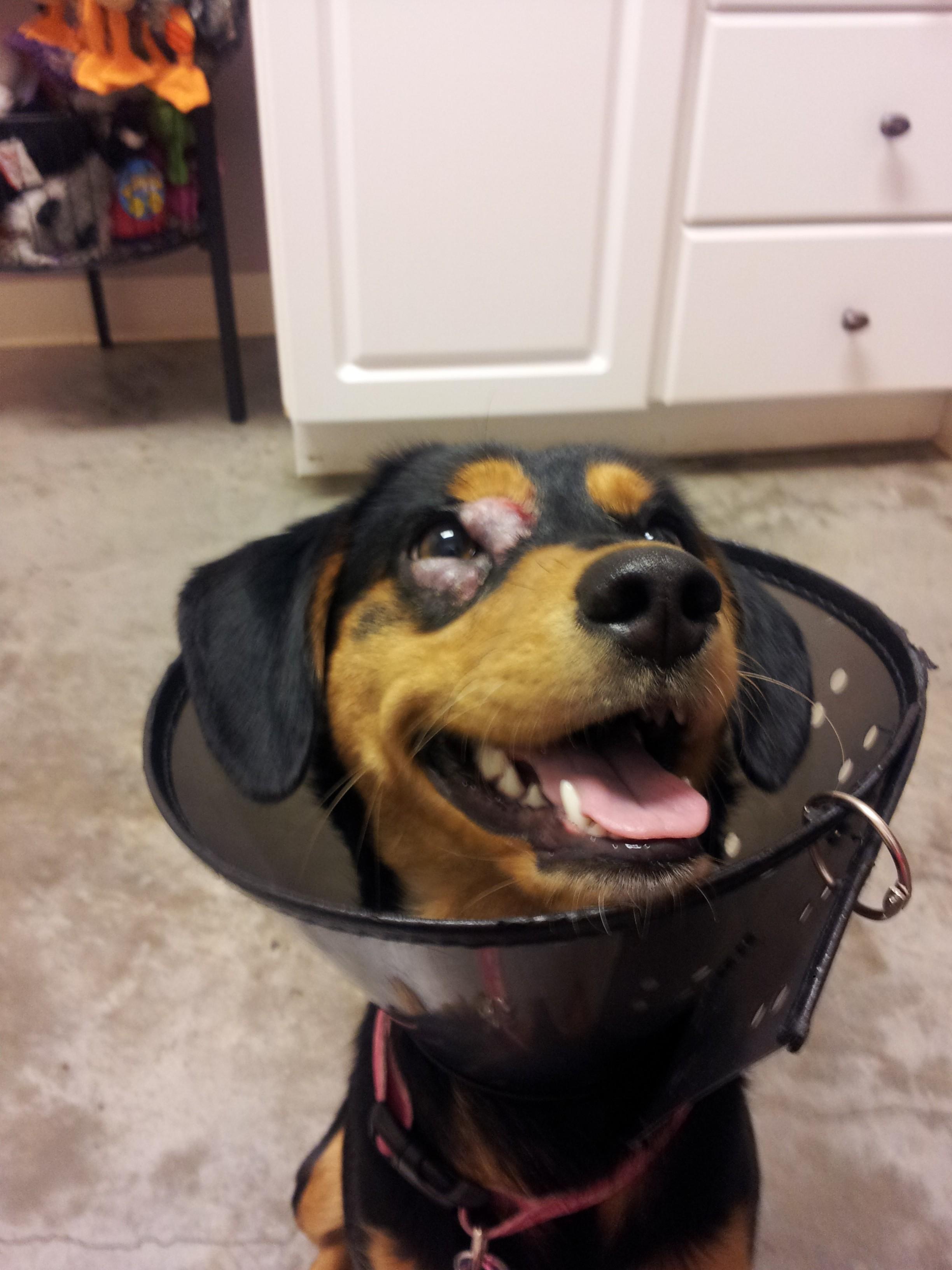 Molly at the vet, January 2014