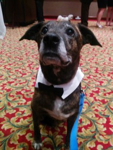 Emmett dons a black tie to raise funds for canine cancer research