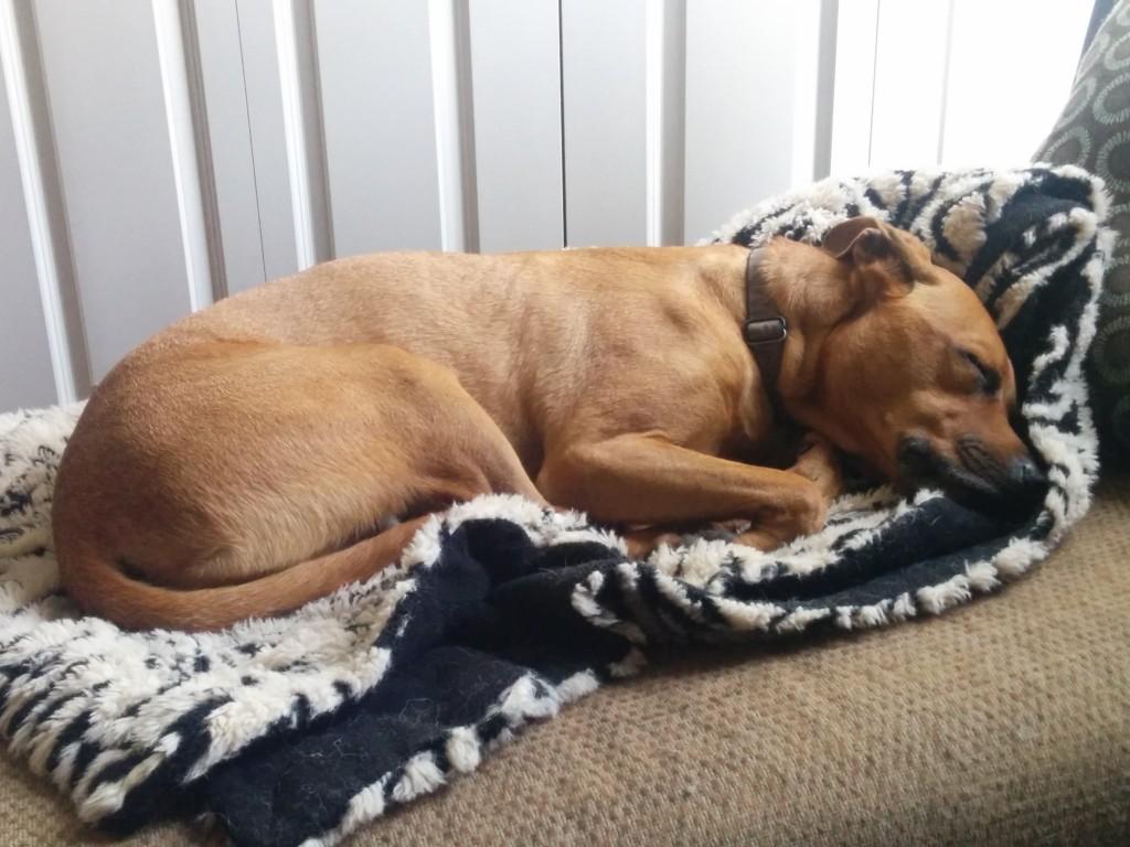 Sleepy Cooper