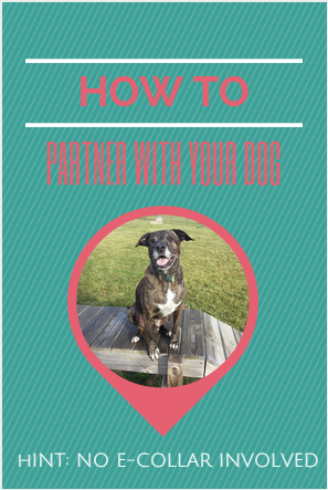 How to partner with your dog