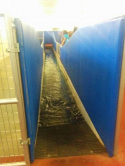 Underwater treadmill for horses