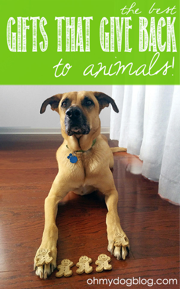 The best gifts that give back to animals (with giveaways!)